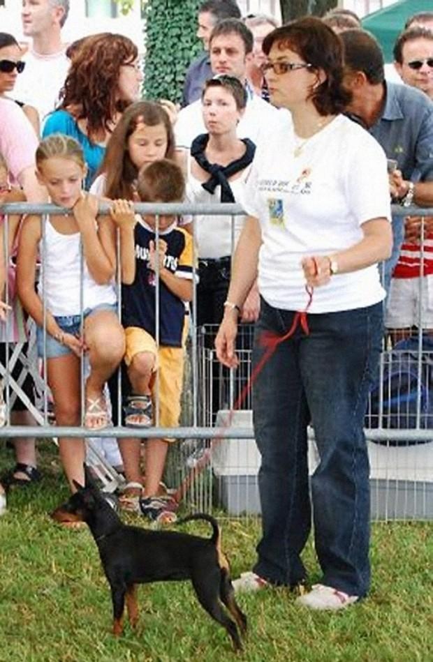 17.08.2008: BOB all'Esposizione Nazionale di Sacile (PN) (Foto: Gianni di L'informacani) BEST IN SHOW GIOVANE ALLO SPEZIAL-ZUCHTSCHAU DI KAISERSLAUTERN (D) DEL 24.08.2008